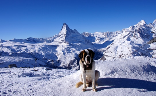 St Bernard Top of Zermatt Switzerland