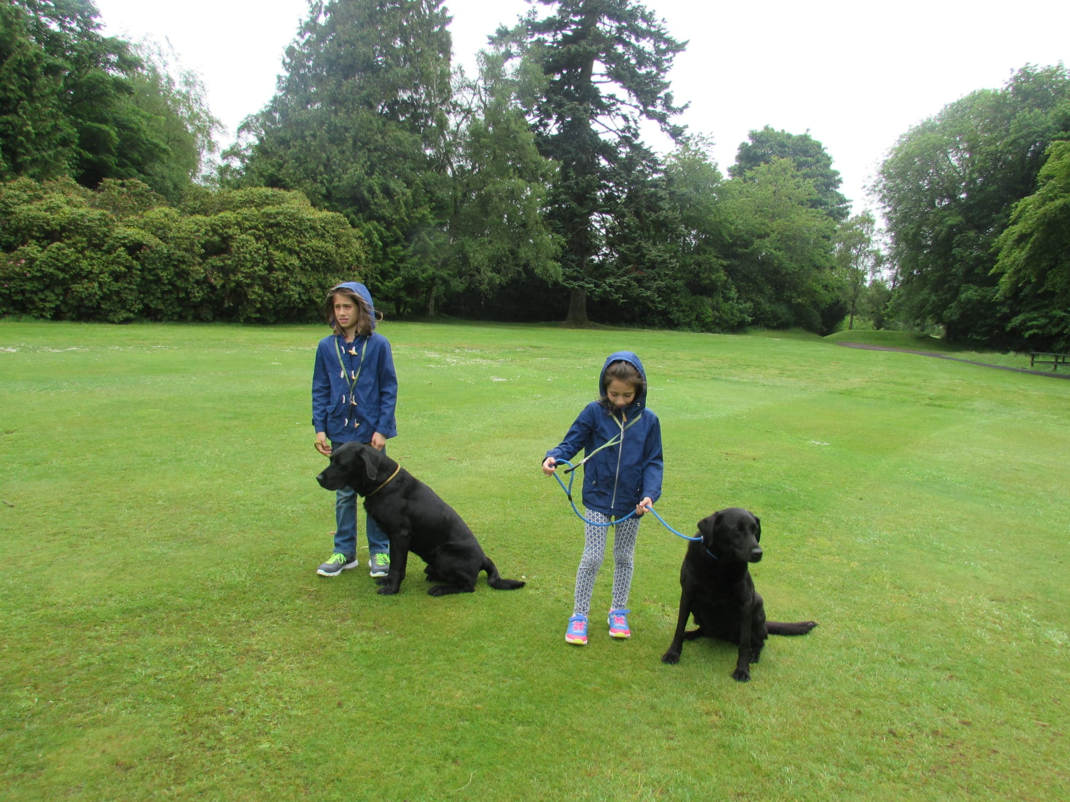 Spending time with the fab dogs at the Gleneagles' Gundog school