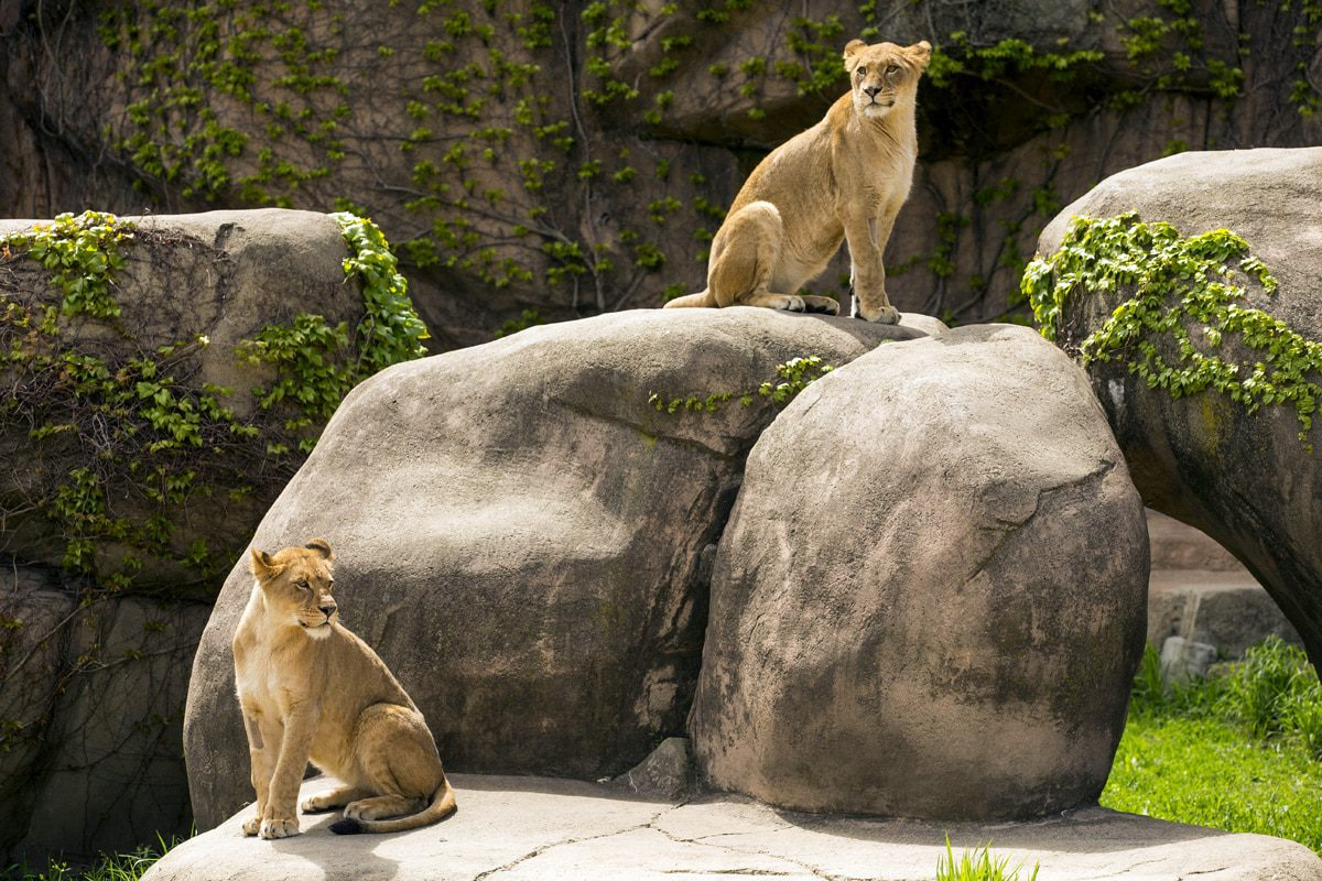 Best Things to Do in Chicago with Kids, Lincoln Park Zoo